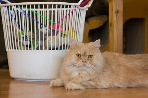 Il gatto con i giocattoli