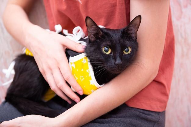 Gatto in coperta medica gialla per gatti, isolato su sfondo bianco. trattamento di un animale domestico dopo l'intervento chirurgico, sterilizzazione.