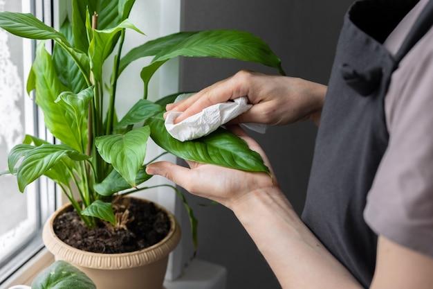 Una donna caucasica o europea si prende cura dei fiori e delle piante di casa