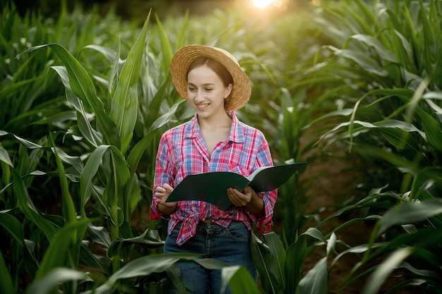 Contadino caucasico che cammina nel campo di mais ed esamina il raccolto prima della raccolta al tramonto. agricoltura - produzione alimentare, concetto di raccolta.