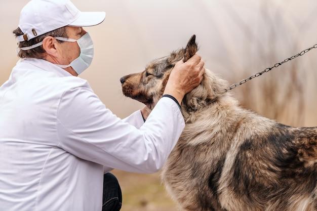 Veterinario senior caucasico che verifica cane sul guinzaglio. esterno rurale. Foto Premium