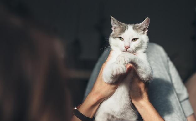 La donna caucasica è sdraiata sul divano e tiene in mano un gatto bianco ammirandola