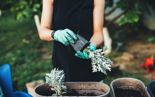 La donna caucasica che indossa i guanti sta rinvasando alcuni fiori nel cortile a casa