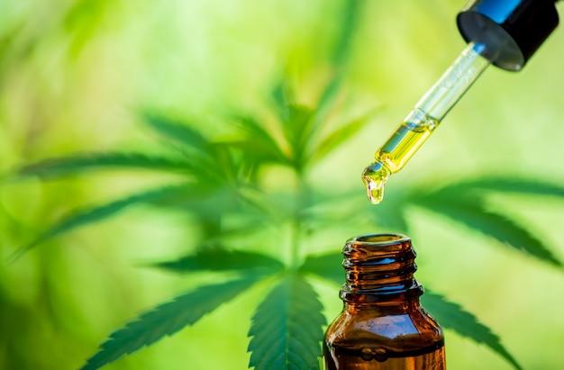 Olio di canapa cbd, flebo, bio-medicina ed ecologia, pianta di canapa, erba, medicina, olio di cbd da estrazione medica