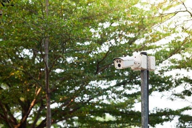 Telecamera di sicurezza cctv su palo con vegetazione nel parco pubblico.