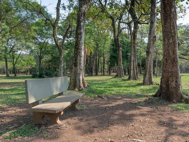Banco di cemento e alberi in un parco.