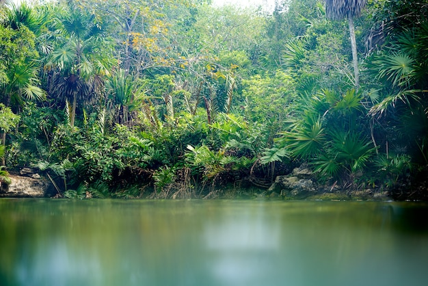 Cenote in riviera maya del messico maya