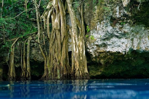 Inghiottitoio di cenote nella giungla maya della foresta pluviale