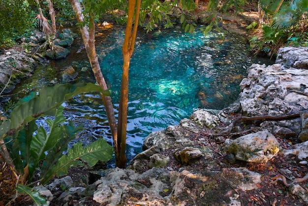 Cenote inghiottitoio nella riviera maya del messico