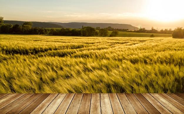 Campo di cereali in una giornata ventosa e soleggiata