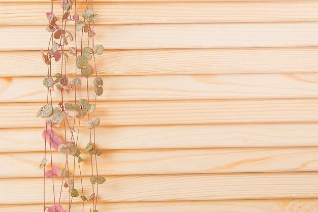 Ceropegia lascia che incombe su uno sfondo di legno