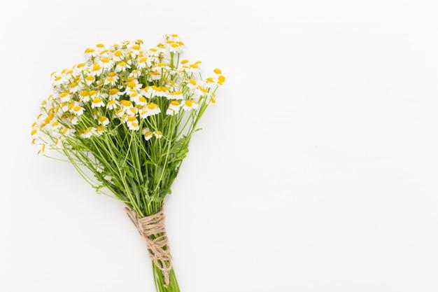 Tema di aromaterapia alla camomilla, cosmetici fatti a mano. spazio per erbe di fiori testuali e mediche