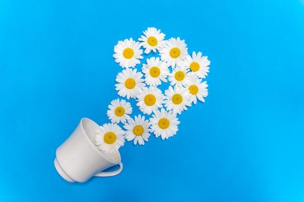 Camomilla in una tazza camomilla tè lenitivo naturale medicina naturale medicina alternativa pulizia