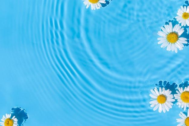 Fiori di camomilla su uno sfondo di acqua blu con cerchi concentrici da una goccia. vista dall'alto, posizione piatta