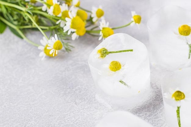 Camomilla in cubetti di ghiaccio su un tavolo grigio