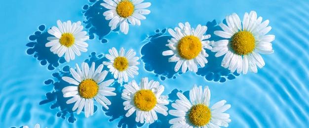 Camomille su uno sfondo di acqua blu sotto luce naturale. vista dall'alto, piatto. bandiera.