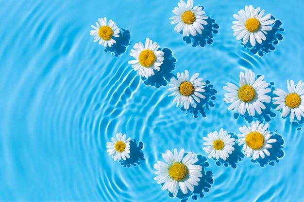 Camomille su uno sfondo di acqua blu sotto luce naturale. vista dall'alto, piatto.