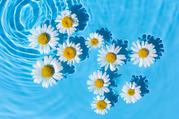 Camomille su uno sfondo di acqua blu sotto luce naturale. vista dall'alto, piatto. Foto Premium