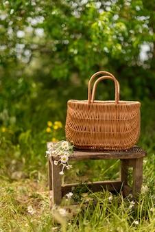 Camomille in un cesto in piedi in un campo di camomilla