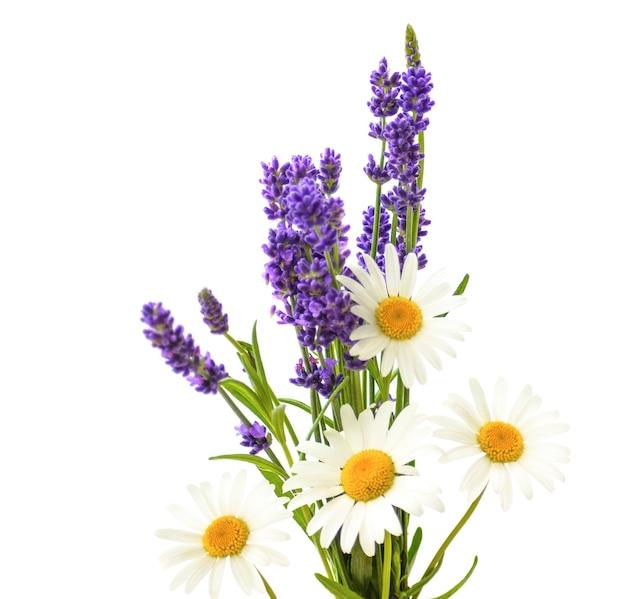 Camomille e fiori di lavanda su sfondo bianco