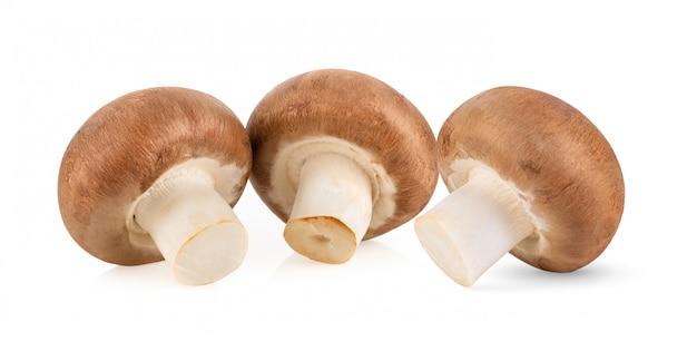 Funghi del fungo prataiolo isolati su bianco