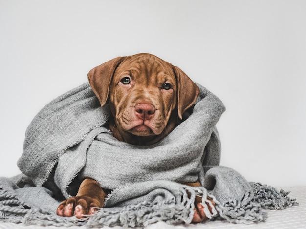 Affascinante, adorabile cucciolo di colore marrone.