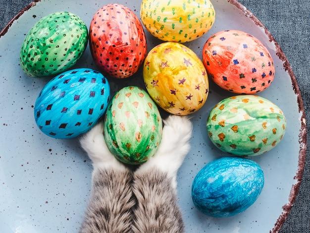 Affascinante gattino e uova di pasqua dipinte con colori vivaci su uno sfondo bianco. vista dall'alto, primo piano. buona pasqua. prepararsi per la vacanza