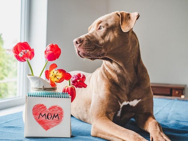 Affascinante cucciolo di colore marrone e tulipani luminosi.