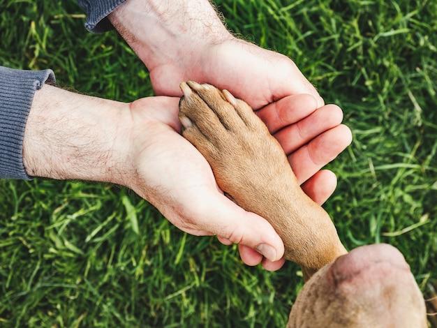 Affascinante, dolce cucciolo di colore cioccolato. primo piano, all'aperto. luce del giorno. concetto di cura, educazione, addestramento all'obbedienza, allevamento di animali domestici