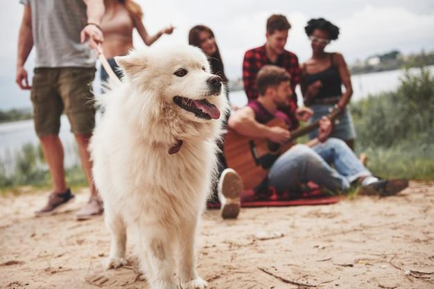 Cane carino allegro. un gruppo di persone fa un picnic sulla spiaggia. gli amici si divertono durante il fine settimana.
