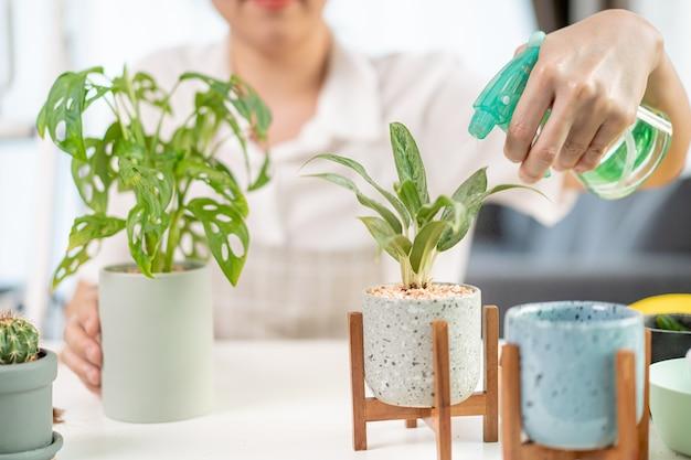 Una donna asiatica allegra e felice che innaffia una piccola pianta d'appartamento nella stanza da vicino, innaffia delicatamente una pianta usando spruzzi d'acqua. la ragazza asiatica felice si diverte a piantare e innaffiare un cactus e una pianta d'appartamento.
