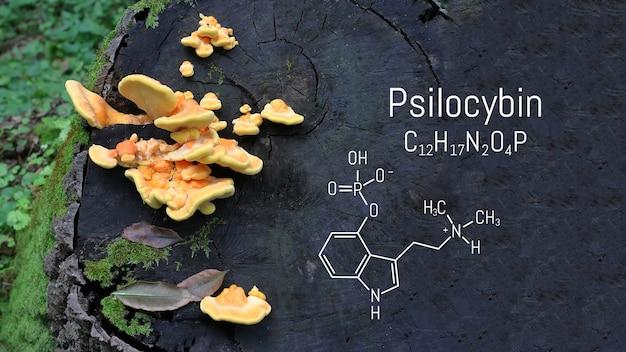 Formula chimica della psilocibina su una lavagna funghi magici. funghi psilocibina, una droga psichedelica che provoca allucinazioni