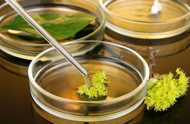 Ricerca chimica in primo piano delle capsule di petri