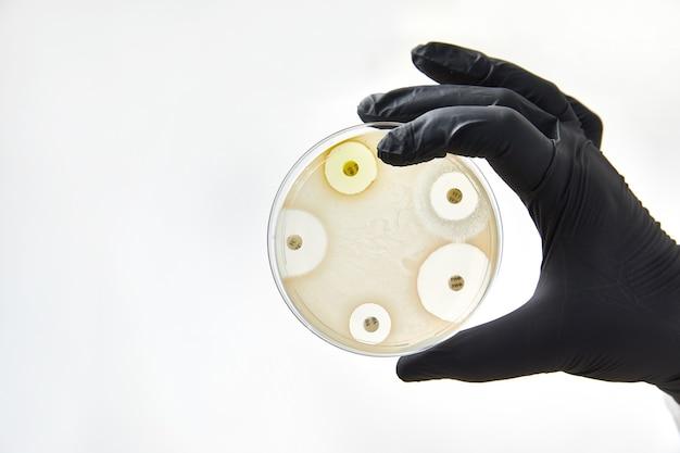 Chimico che indossa guanti in laboratorio. processo di prova con lastra di vetro e campione. virus e concetto di assistenza sanitaria.
