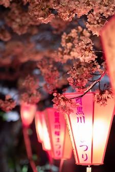I fiori di ciliegio si illuminano di notte con la lanterna del giappone al fiume meguro