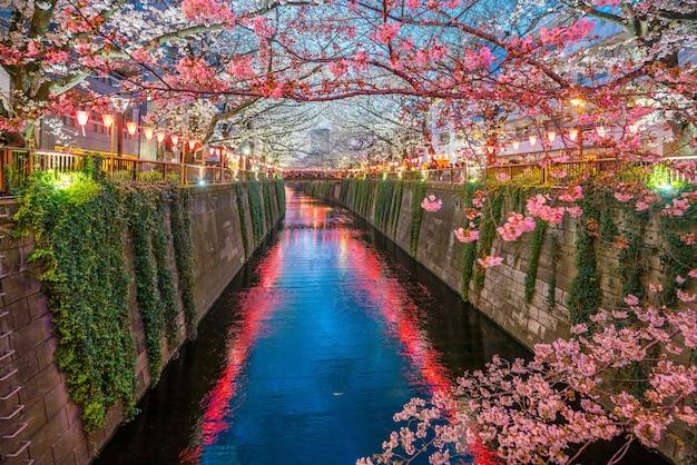 Fiore di ciliegio al canale meguro a tokyo, giappone di notte
