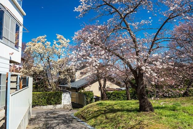 Fiore di ciliegio o sakura piena fioritura al villaggio locale con cielo blu, matsumoto, nagano, giappone. bellissimo villaggio periferico con vista naturale
