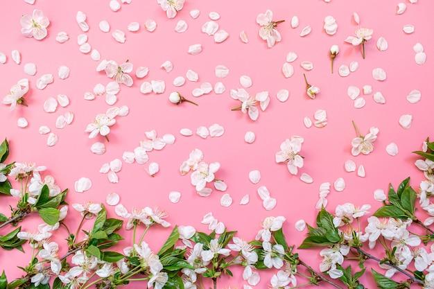 Fiori di ciliegio su sfondo rosa con spazio di copia.