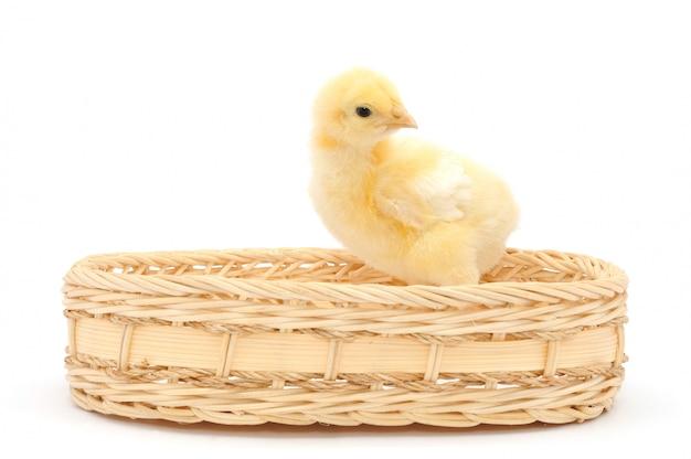 Merce nel carrello di pollo