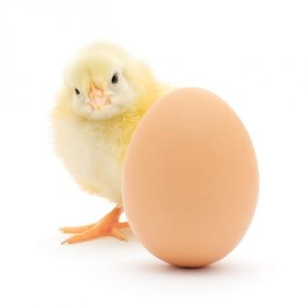 Pollo e uovo isolati