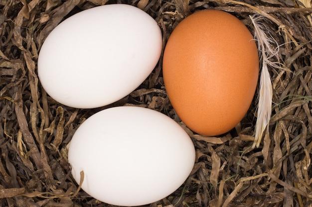 Uova di gallina nel nido