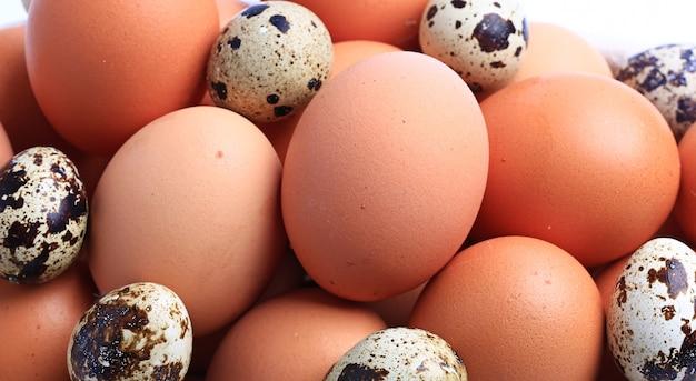Pollo e uova di quaglia isolate su sfondo bianco