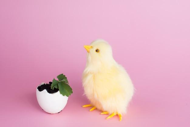 Un pollo e una pianta germogliata in un guscio d'uovo
