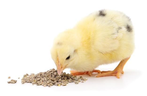 Pollo con cibo isolato