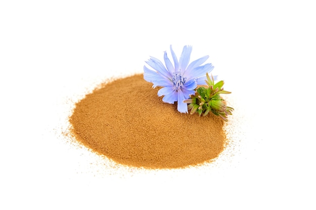 Radice di cicoria in polvere con fiore blu isolato