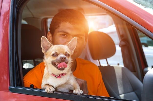 Chihuahua cane si siede in macchina con il suo proprietario giovane afroamericano con lui sul sedile anteriore al tramonto in estate.