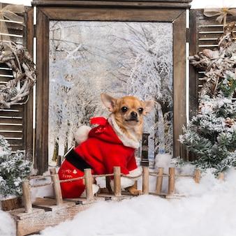Chihuahua che indossa un abito natalizio seduto su un ponte