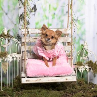 Chihuahua con giacca rosa su cuscino rosa, in decorazione pastorale