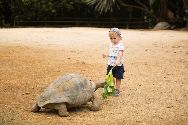 Bambino che allatta la tartaruga gigante di aldabra. mauritius