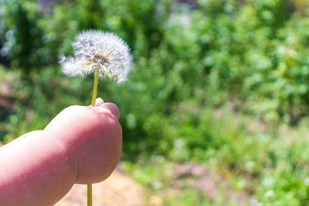 Mano del bambino che dà un fiore